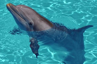 Southwest Florida Images - Dolphin